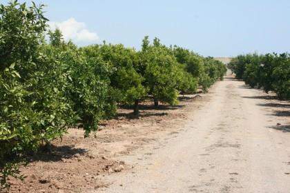 El Consell Agrari d'Almassora impulsarà la formació agrícola amb el Banc de Terra