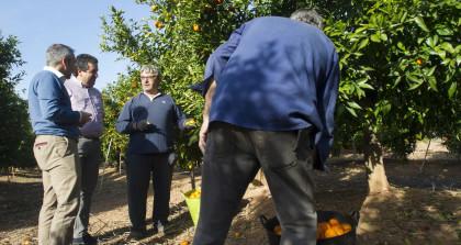 """Barrachina (PP): """"Hem aconseguit un futur d'estabilitat i creixement en el sector agrícola"""""""