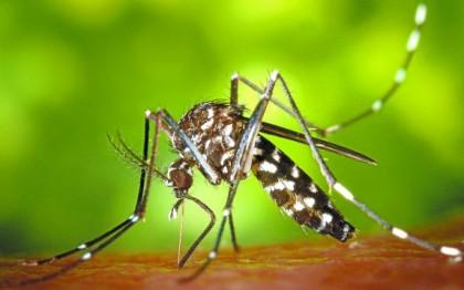 Vinaròs informa contra el mosquit tigre