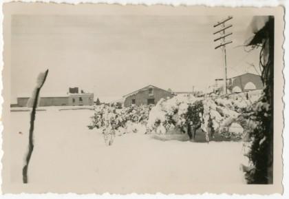 1946: L'any de la gelà