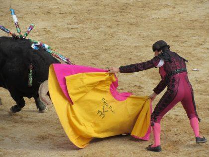 Els bous protagonitzen l'agenda festiva del cap de setmana a Les Coves de Vinromà