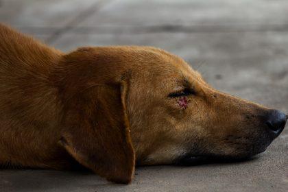 Un home perfora el pulmó d'un gos a Alcalà de Xivert