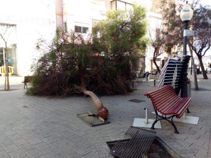 Múltiples destrosses pel vent a Vinaròs