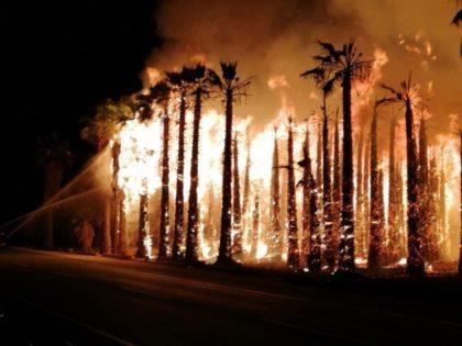 Detingut un home per provocar diversos incendis a Elx