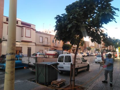 L'Ajuntament de la Vall d'Uixó realitza tractaments contra la cotxinilla i la processionària en els arbres