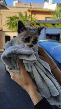 Rescatat un gat atrapat en una canonada a Vila-real
