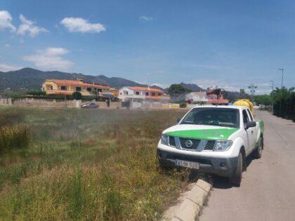 Benicàssim programa tractaments contra mosquits després de les pluges